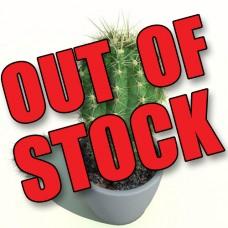 DIY AND VAP - Aroma Cactus